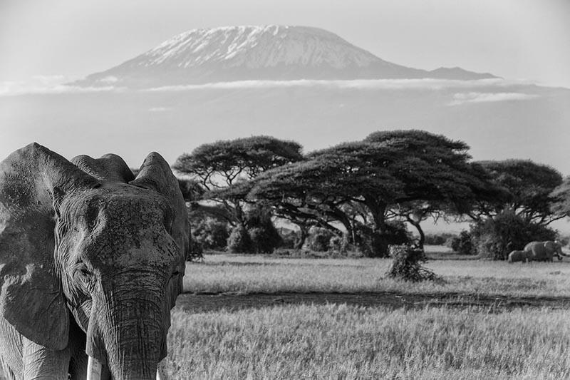 kilimanjaro-283886_1280